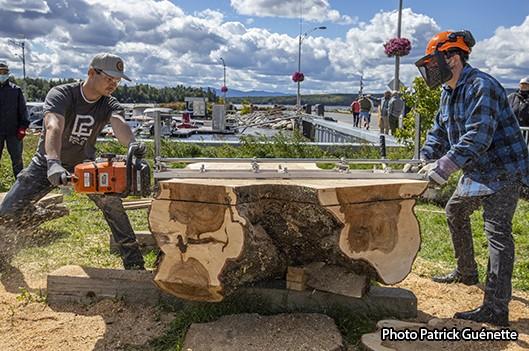 Grands arbres de la rue Champlain deviendront mobilier urbain! -   : Actualités Municipalité